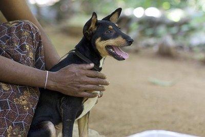 Robyn rescue dog - March Charity Dogstar Foundation